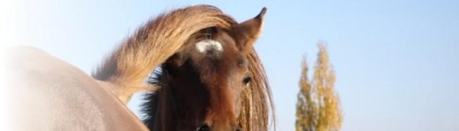 cropped-cavalls-top21.jpg